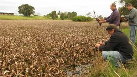 Water Hyacinth will deplete oxygen as it decays