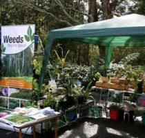 kuringai gardens display also features weeds